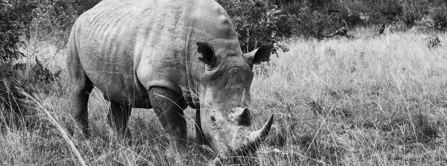 CJ_Sighting_Rhino_7Apr15-52-copy