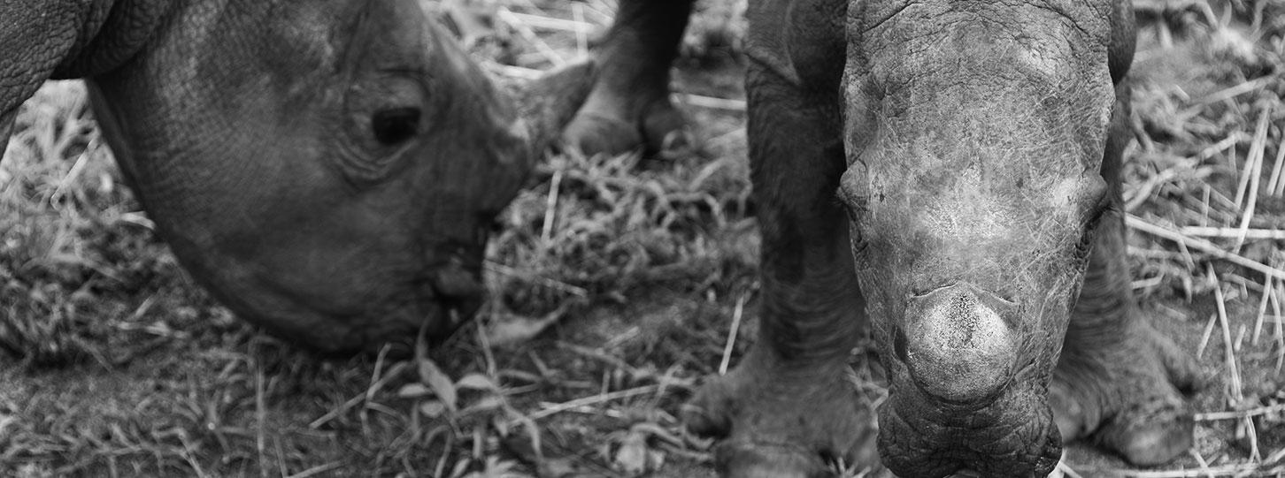 HESC_Orphan_Rhino_Stompi&Balu_am2_18Nov15-7
