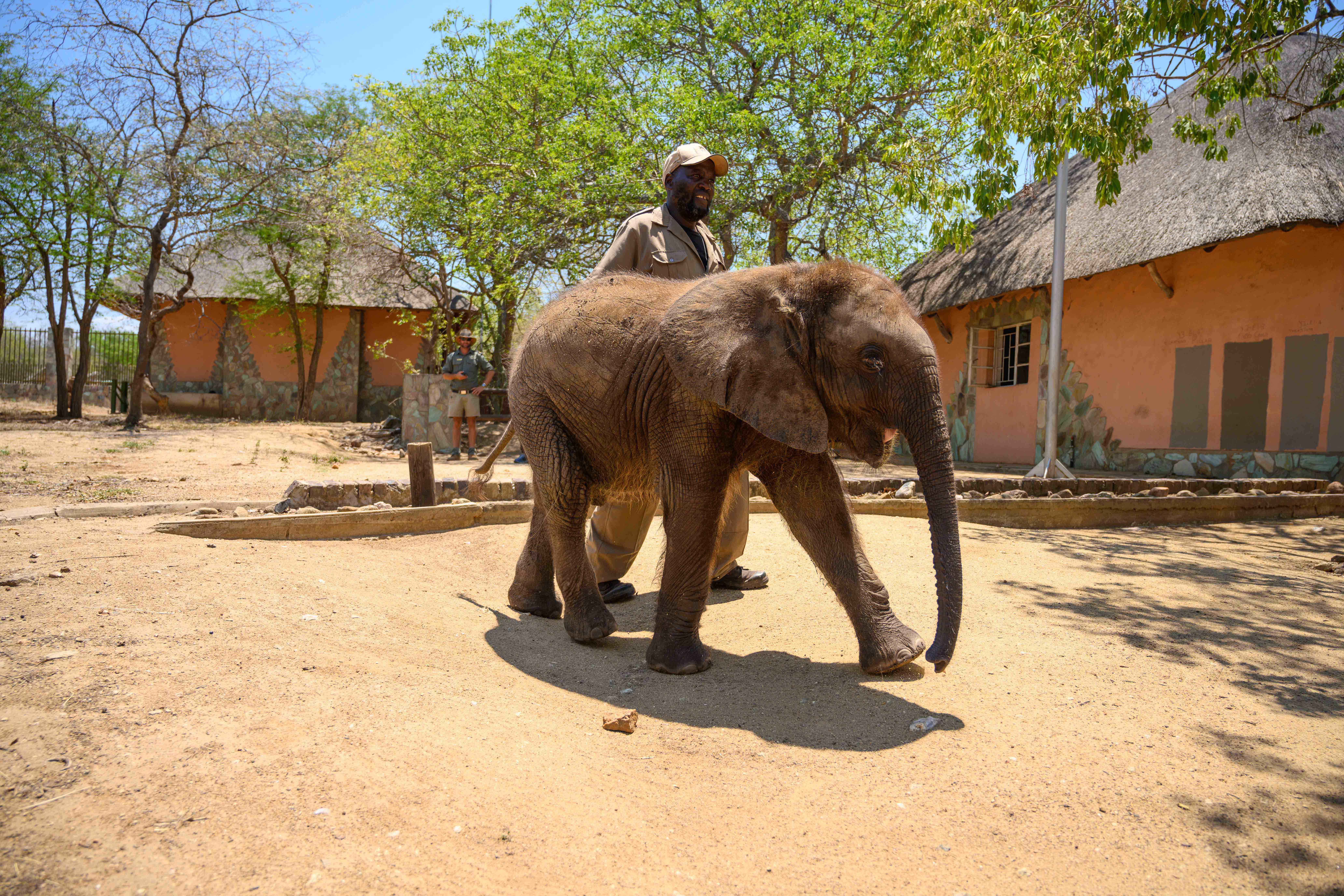 Wildlife Conservation Trust_Elephants_Rehabilitation_ HERD