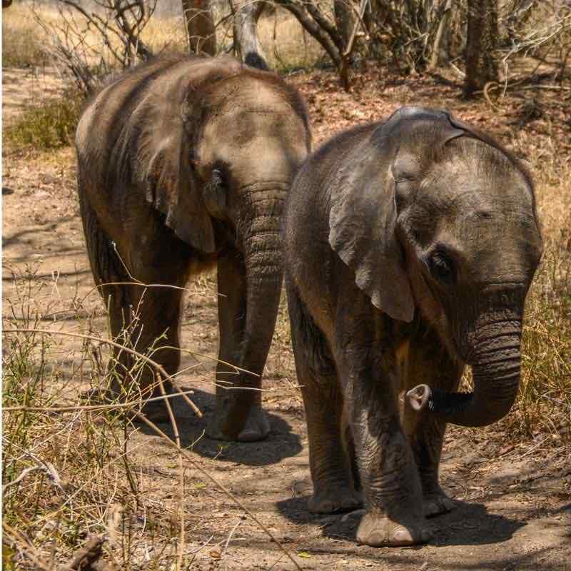 Baby-elephants-orphange