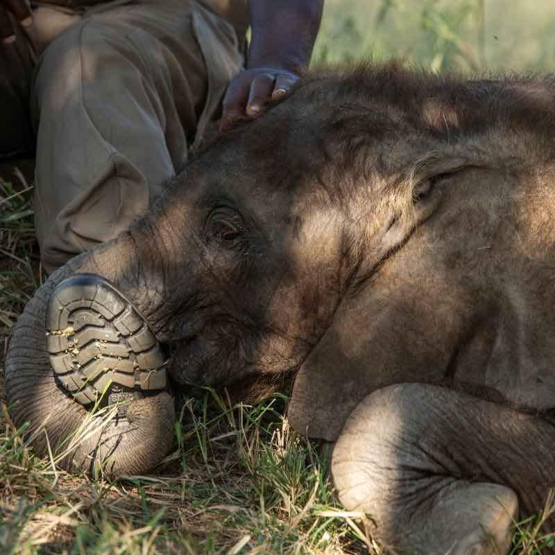 Orphan-elephant-Mopane