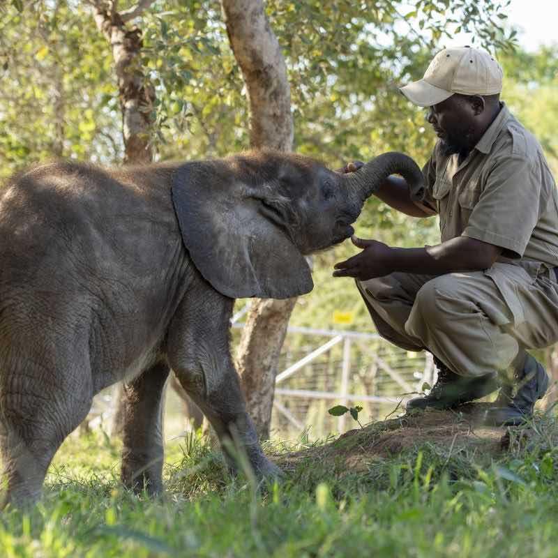 elephant-orphanage-southafrica