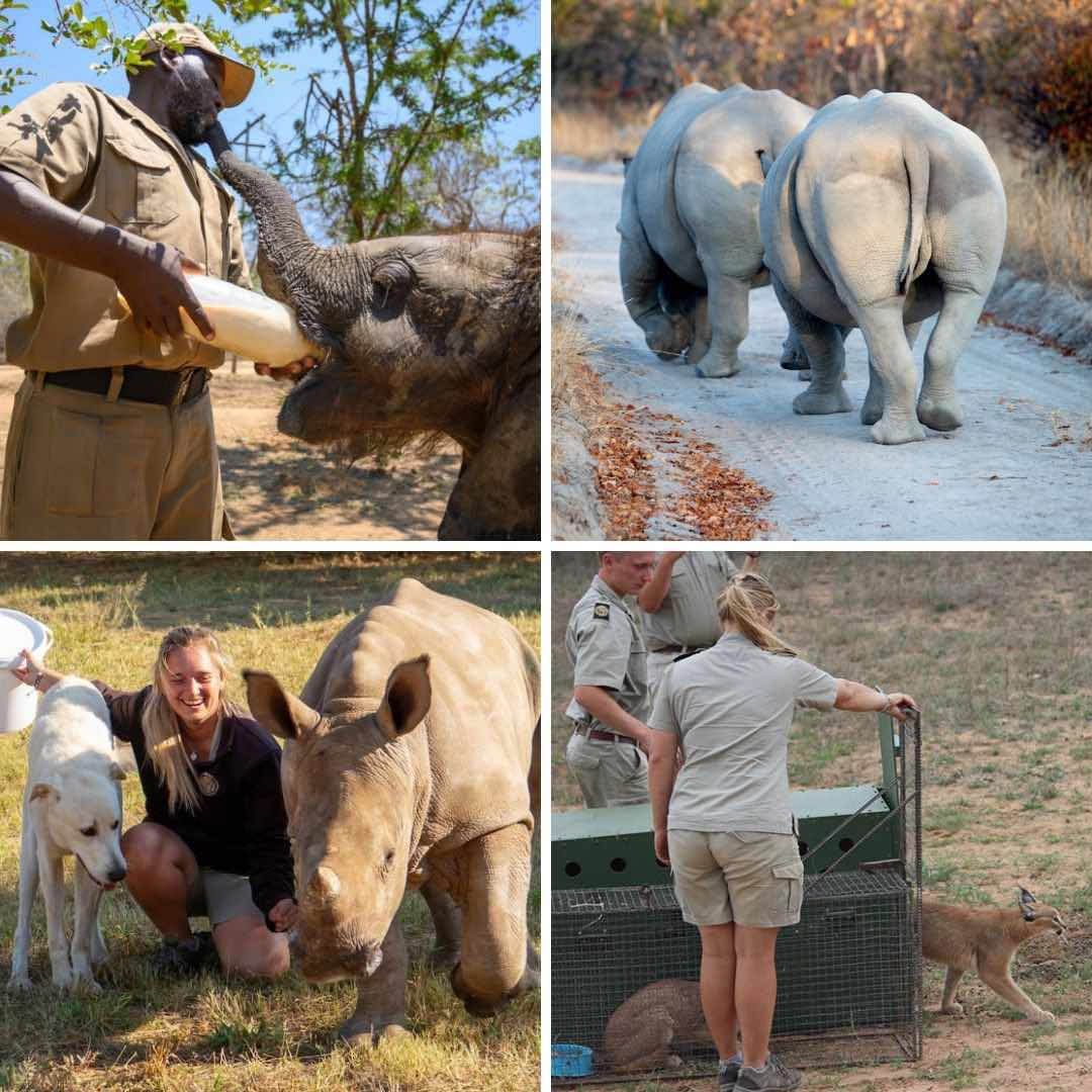 Wildlife conservation trust donation page