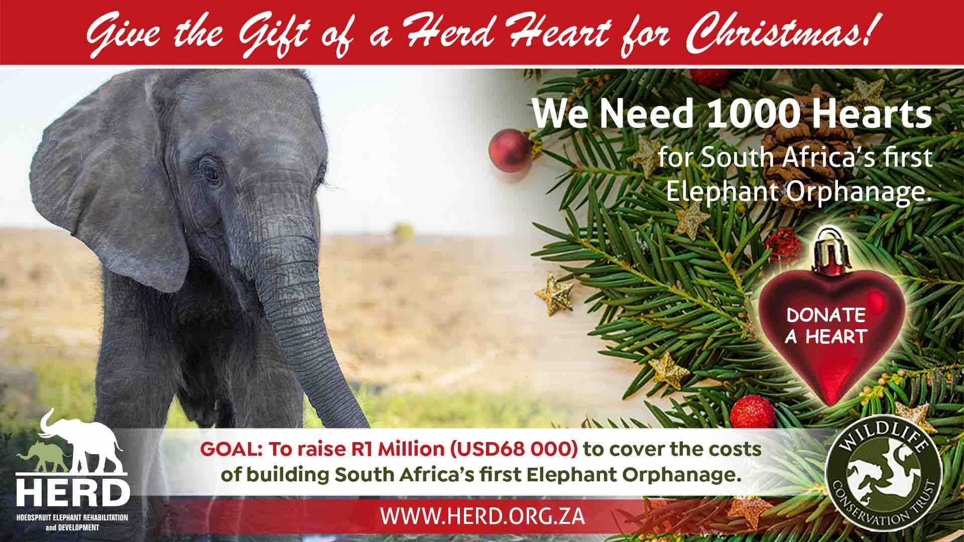 1000 Hearts for Christmas elephant orphanage